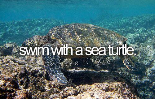 swim with a turtle