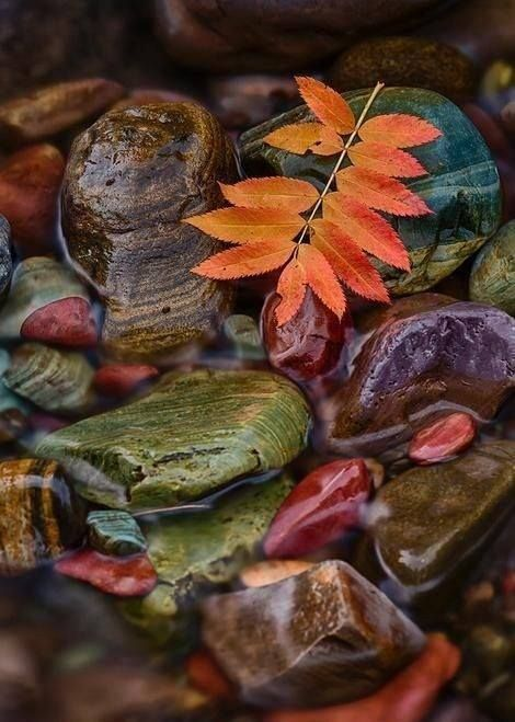 Rocks and fall leaves