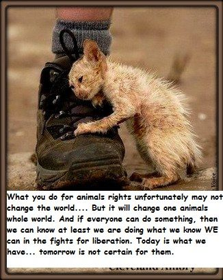Animal rights.....now