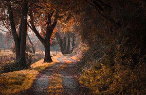 táj, természet, út, ősz, fák, levelek, bokrok, fű, földút, árnyék