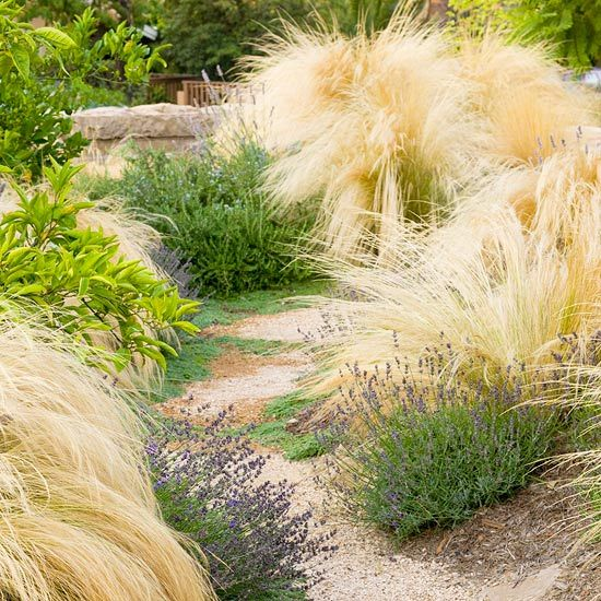 167 best drought tolerant landscaping ideas images on for Low maintenance drought tolerant plants