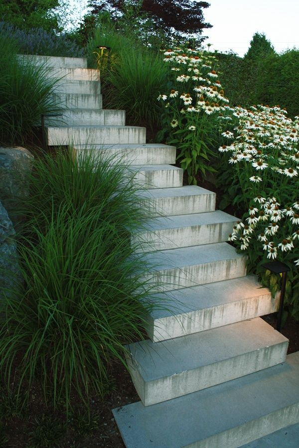oncrete staircase made of roman treads surrounded by pennisetum, echinacea 'white swan' + lavandula 'grosso' by botanica design, vancouver bc