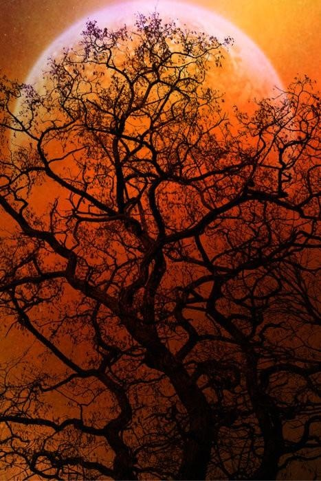 We love how this tree's intricate branching structure casts a silhouette against the illuminated sky.