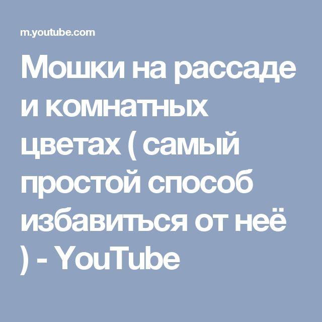 Мошки на рассаде и комнатных цветах ( самый простой способ избавиться от неё ) - YouTube