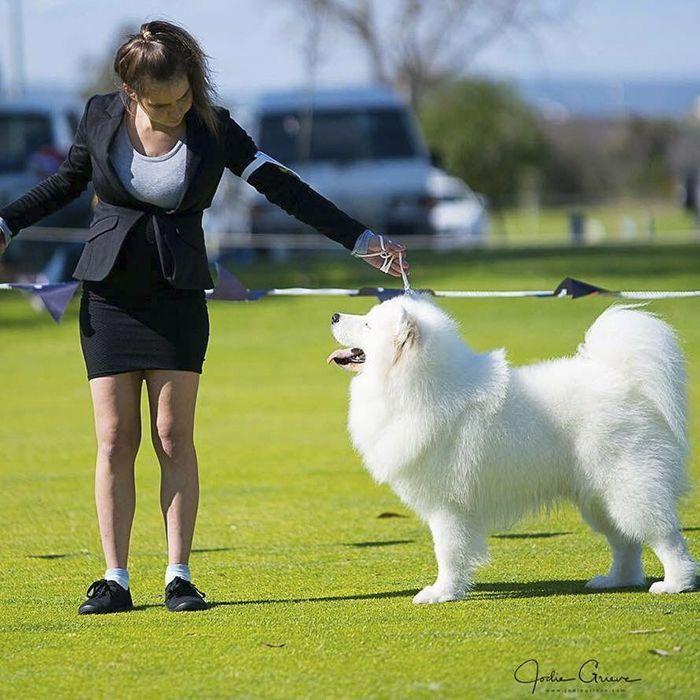 Cheapest Dog Insurance Samoyed Dog Boarding Near Me Dog Insurance