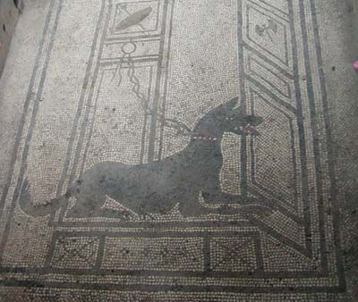 Сторожевая собака. Мозаика. Помпеи. I, 7, 1. Casa di Paquio Proculo