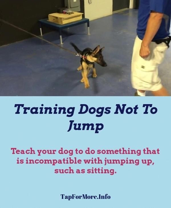 Stop Dog Jumping And Dog Training Tips Safety Check The Pin For