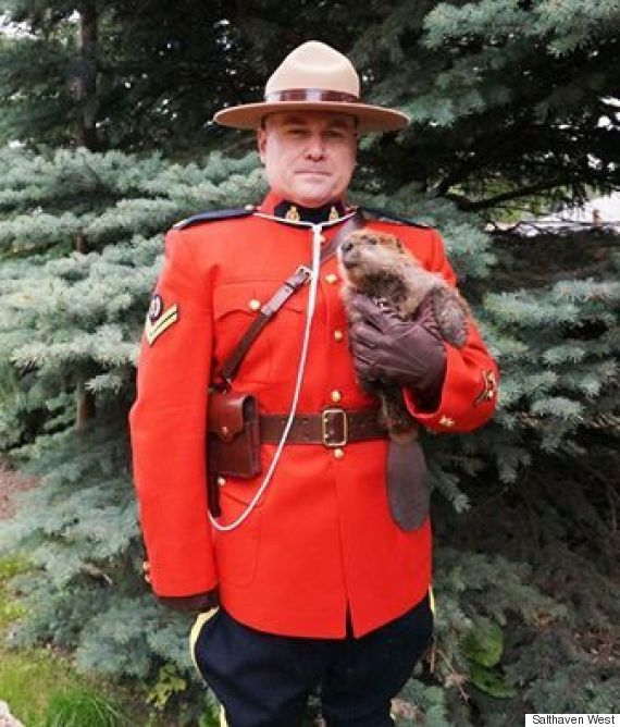 A Mountie Holding a Beaver | Our volunteer Jason stopped by and we couldn't resist taking his photo with one of our patients! | Salthaven West Rehabilitation Centre, Regina • August 19, 2016