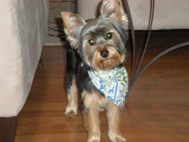 Britt's little cowboy, Oliver, looking handsome in his handkerchief.