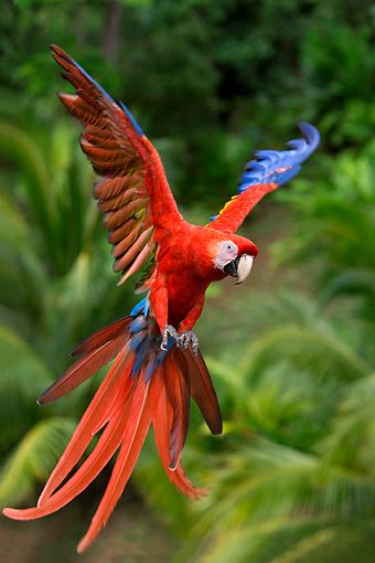 544 best images about Parrots of the World?