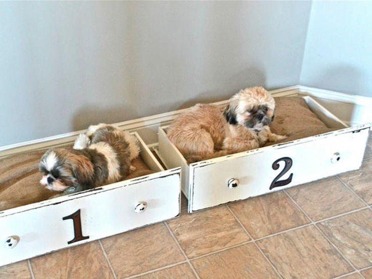 ¡En cajones! #mascotas #puppies #cachorros