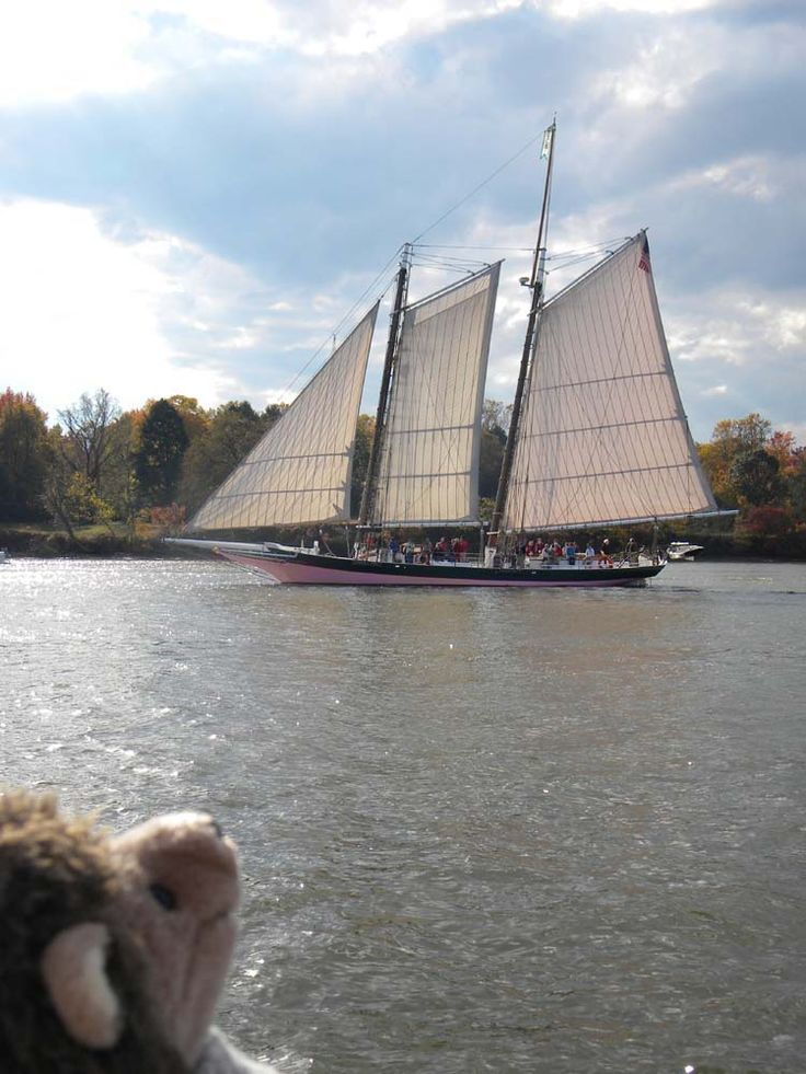 it's the Pink Lady!!! (pungee schooner Lady Maryland)