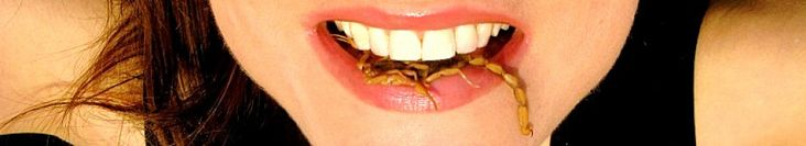 Girl Meets Bug  Edible Insects: the Eco-Logical Alternative  List of edible Insects