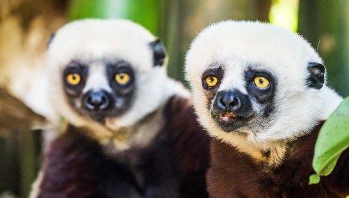 How To Visit The Lemur Park Outside Antananarivo.