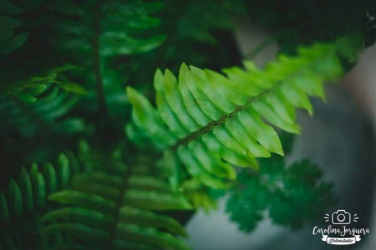Amar el verde