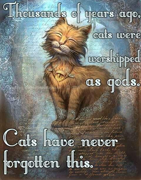 Eyes of Faith Cat // 8 X 10 print // Orange Cat print // Spiritual Cat print…
