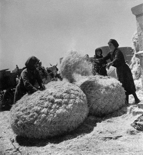 Βριζόμιασμα άχυρου. Αράχωβα, 1950-1955 Βούλα Θεοχάρη Παπαϊωάννου
