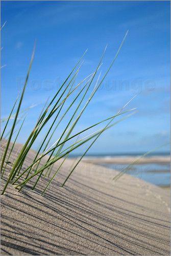"""Bild von Susanne Herppich - """"Strandhafer"""""""