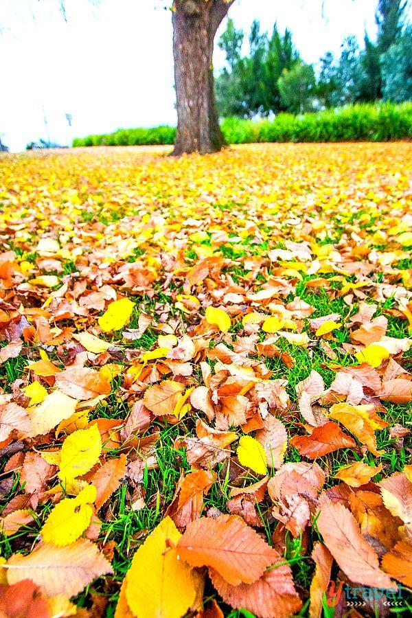 Autumn colors in Bathurst, Australia