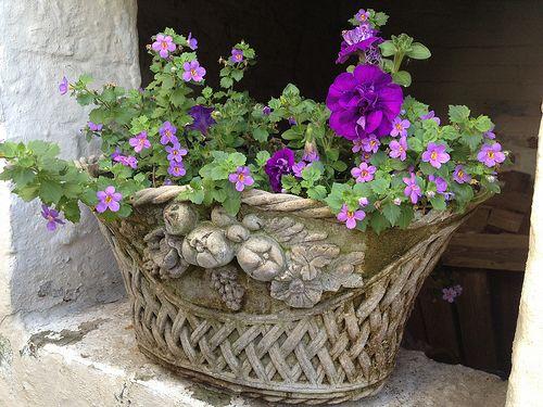 Jardiniere de Juin