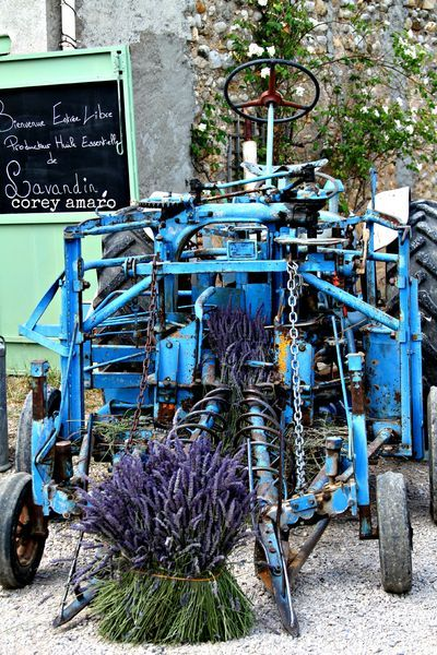 Old tractor that was used to harvesting lavender