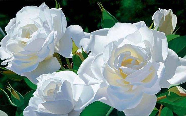 Цветы.Белые розы.. Обсуждение на LiveInternet - Российский Сервис Онлайн-Дневников