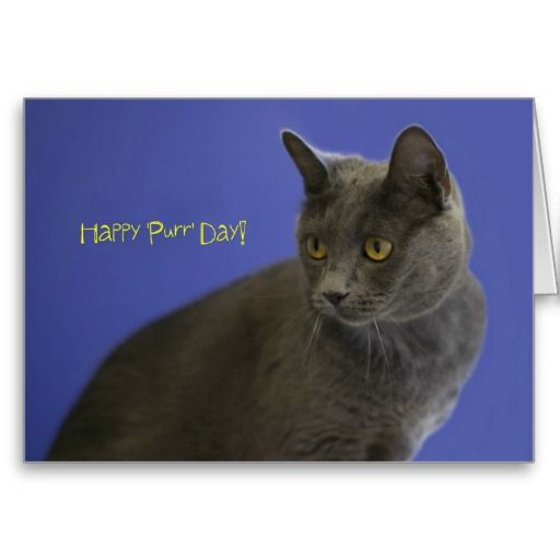 Happy Purr Day Russian Blue by Focus for a Cause