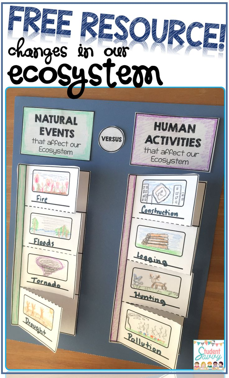 ecosystem projects for 4th grade