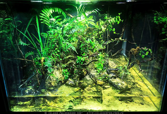 Spirit Of Jungle S Island Paludarium Aquatic Riparian