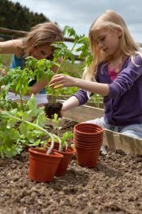 Mon potager nourrit ma famille toute l'année (Fiches conseils) : quantité de graines à planter