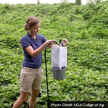 Entomologist Job Description: Salary, Skills, & More