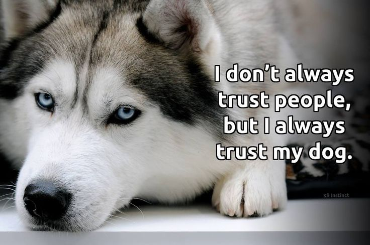 I don't always trust people, but I always trust my dogs
