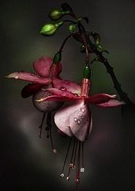 Las flores florecen abierto sin fin en el bien si el agua de pozo artesiano