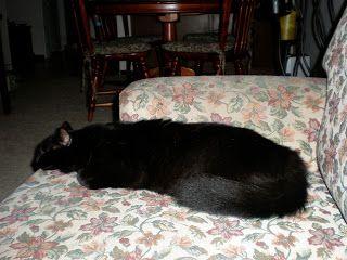 El alféizar de la ventana: ¡A mis gatos no los negocio!