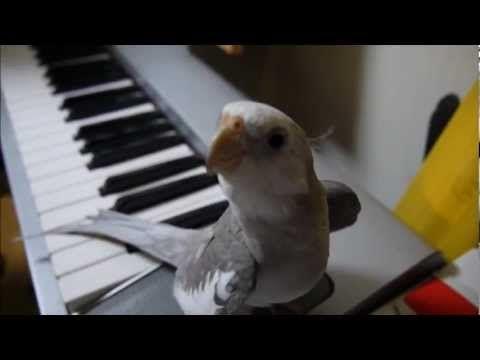 birdie tweets my neighbor totoro theme song