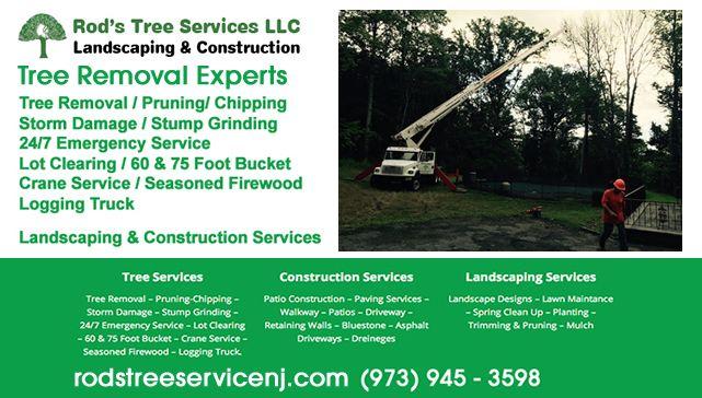 Tree Removal Services Morristown NJ , Tree Removal Services Morristown , Tree Removal Services Morristown New Jersey , Tree Removal Services In Morristown NJ , Tree Removal Services Near Morristown NJ