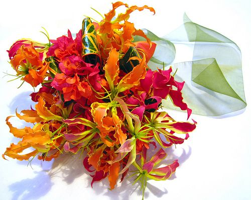 Glorious Gloriosa Lilies