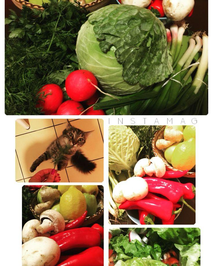 #cat #dinner