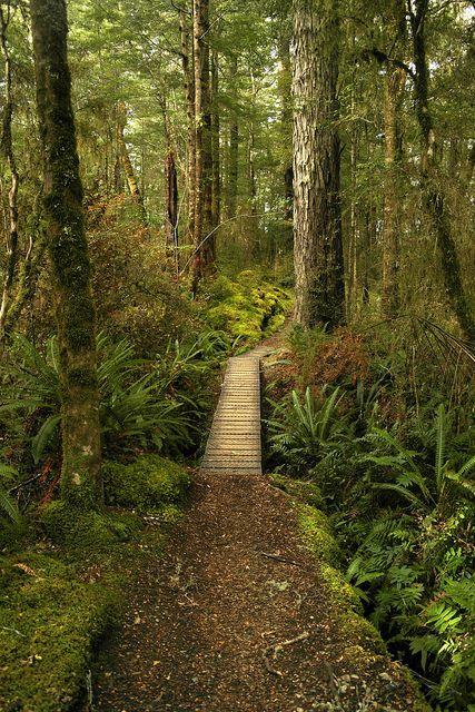 Kepler Track trail | New Zealand.