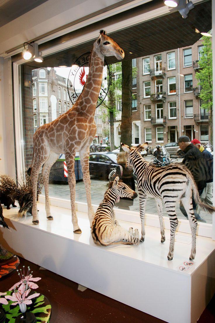 giraffe in de winkel