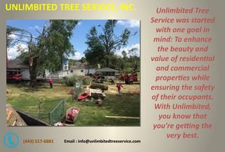 Tree Service Burtonsville - Call Today  Trimming or pruning is said to be one of the important upkeep, regardless of whether it is a fancy tree or others. To play out the undertaking effectively and securely utilizing the correct device, including stepping stool, for the job is must. Some property holders for the most part trim your trees on regular routine.  http://www.unlimbitedtreeservice.com/