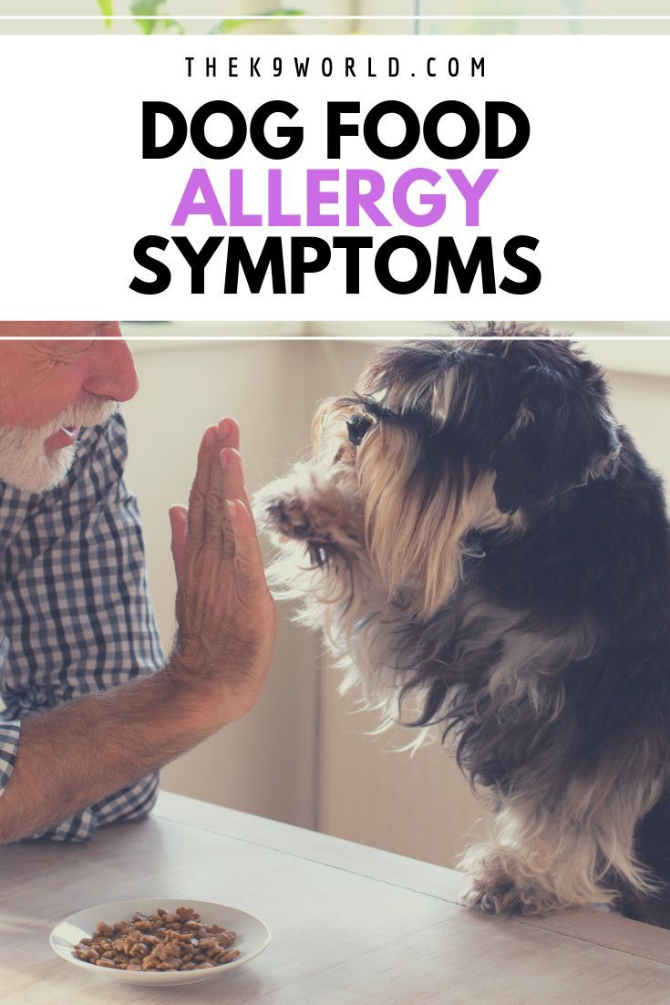Best Dog Food For Skin Allergies Tips And Reviews To Help You