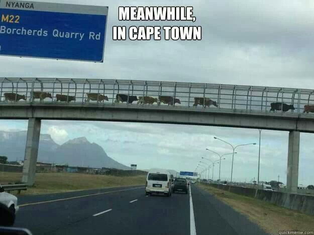 Meantime in Cape Town