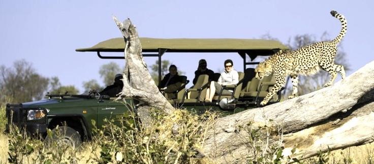Zarafa Camp - A Luxury Safari Camp in the Selinda Spillway