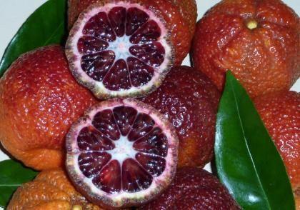 Rubin mandarin - (Citrus Clementina 'Rubino'): Citrusfélék | Ár: 4500.00 Ft