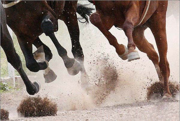 1000+ Images About Horse, Just GALLOP! On Pinterest