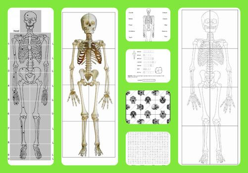 Free printable life-sized child and adult skeletons, skull puzzles and more!