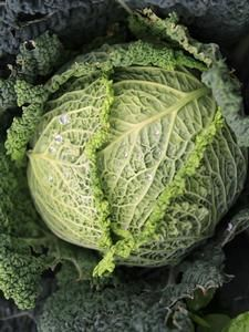 Oderings Garden Centre | Vegetable - Cabbage Savoy