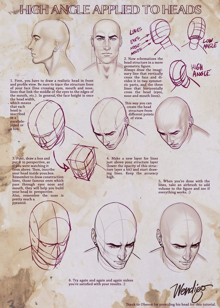 148 Best Anatomy Images On Pinterest Drawing Tutorials Drawing