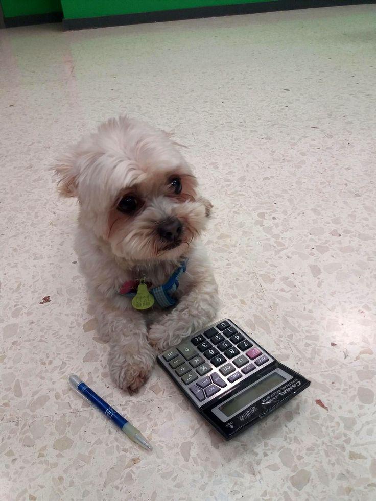 Sobre la inteligencia canina http://www.hvcruzcubierta.com/la-inteligencia-canina/